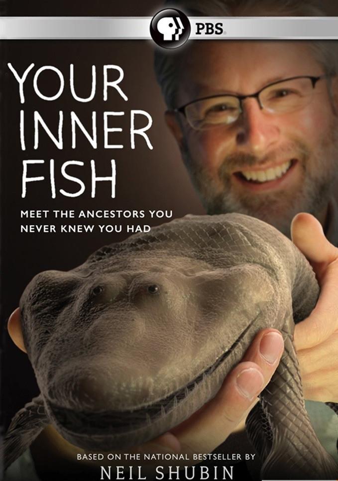 https://cdn.film-fish.comYour Inner Fish